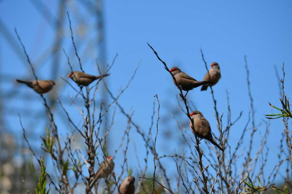 Morning birding. (5/6)