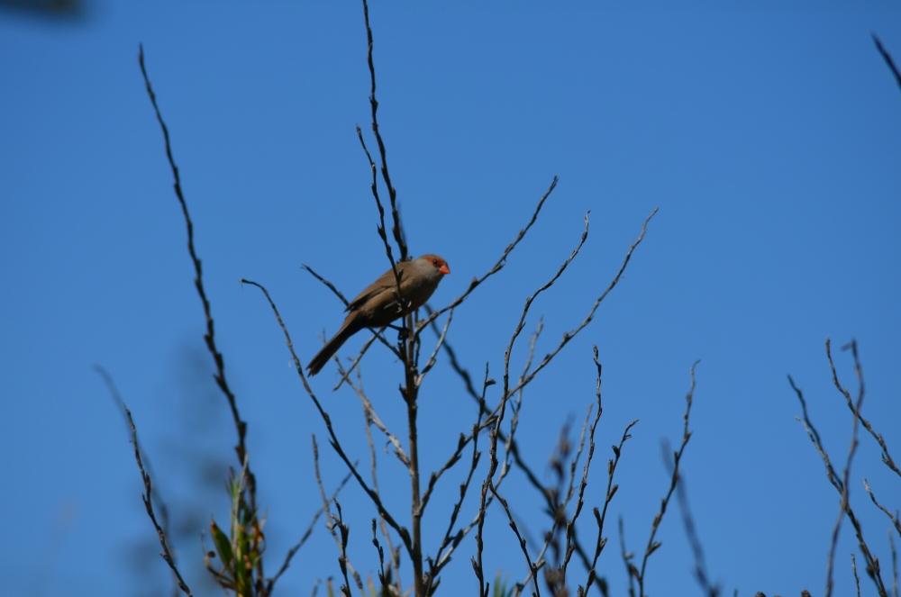 Morning birding. (6/6)