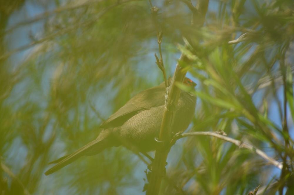 Morning birding. (4/6)