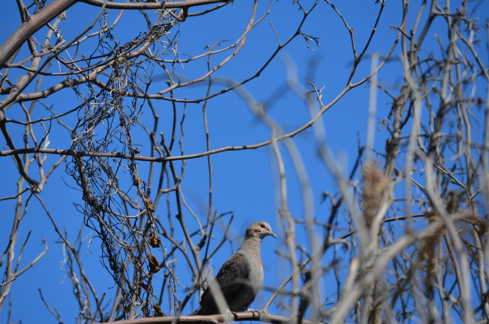 Morning birding. (1/6)