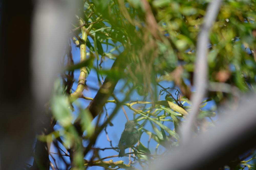 Morning birding. (3/6)