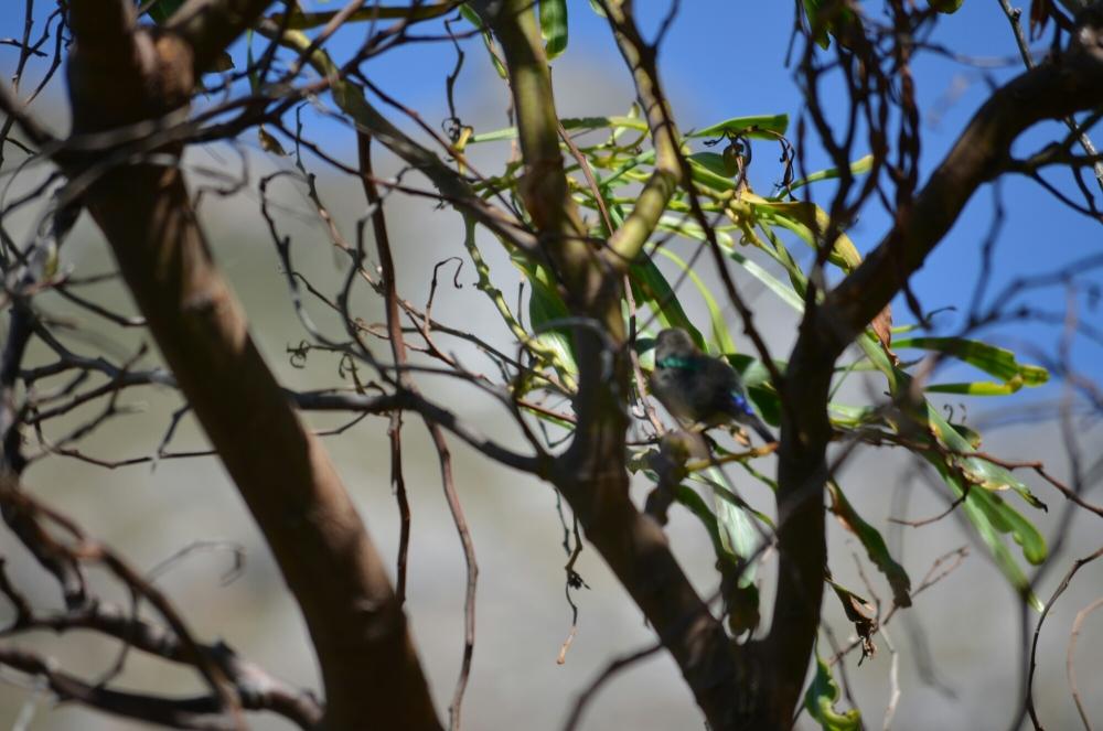 Morning birding. (2/6)