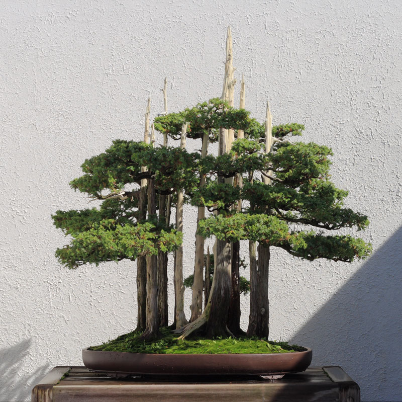 goshin by john naka bonsai forest for grandchildren (5)