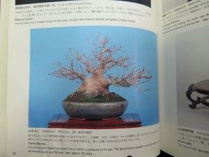 The same tree?