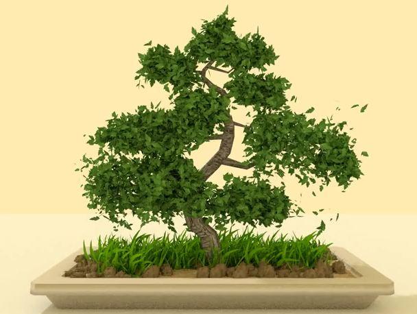 ~ Grateful for Trees ~ Bonsai~