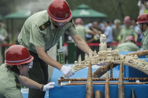 AFP/AFP/File - Workers put ivory items on a sliding belt before being destroyed in Beijing on May 29, 2015