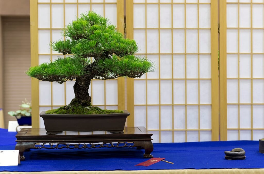2015 Alabama Bonsai Society Spring Show part 3