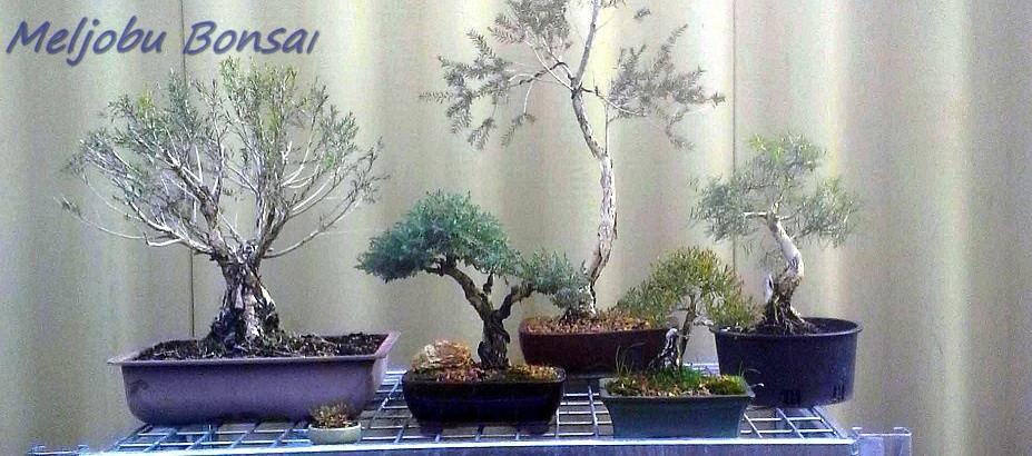 A mates trees