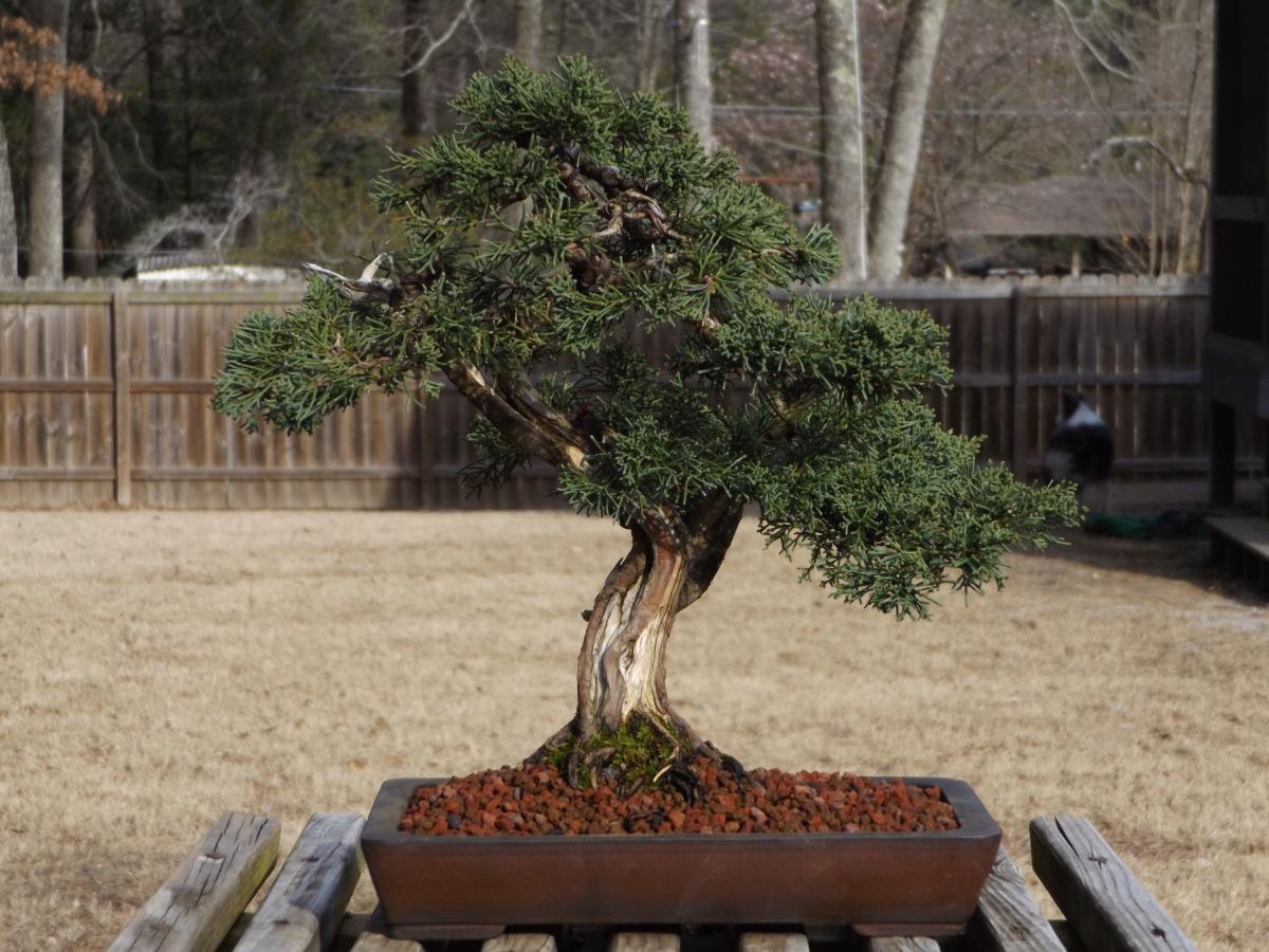 Losing trees #2,under-potting