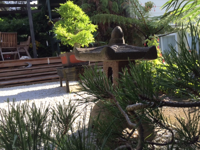 Creativity, Bonsai, Learning and Art: My Thoughts