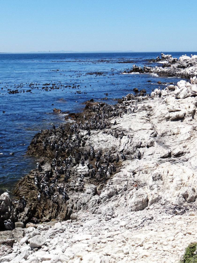 Stoney Point Penguin reserve lives up to the stoney part in the name!!