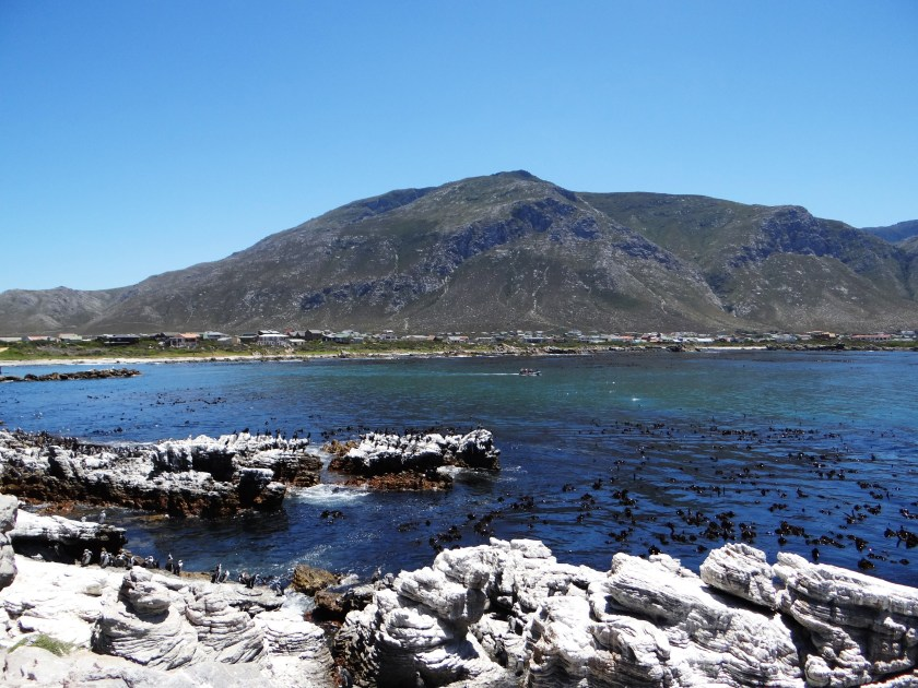 Betty's Bay area is such a beautiful part of the Western Cape coast