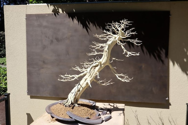 Bonsai tree exhibit offers novel take on 75th anniversary of end of World War II — OPB.org